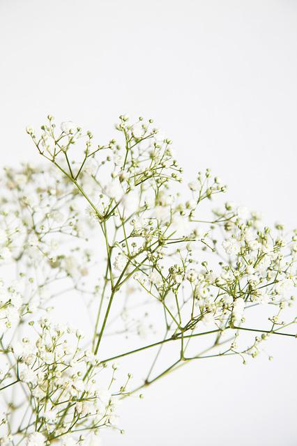 White, Flowers, Garden, Bouquet, Blossom, Blooming