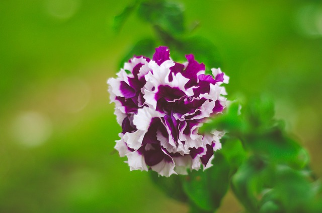Purple, Flowers, Nature, Purple Flower, Blossom, Garden