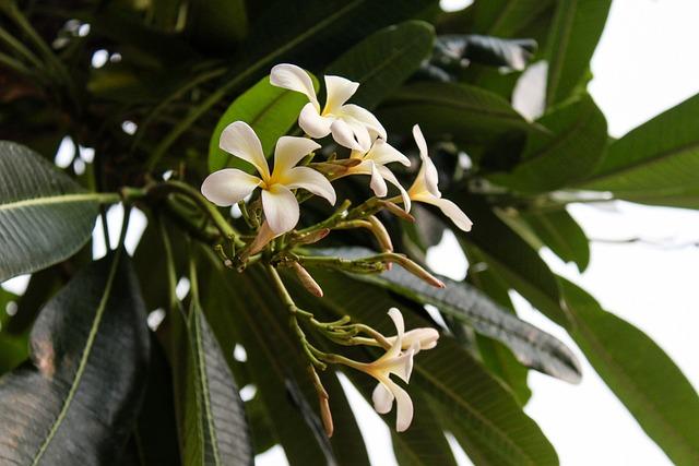 Flower, Nature, Green, Summer, Garden, Blossom, Natural