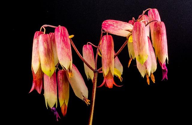 Goethe Plant, Blossom, Bloom, Flower, Close