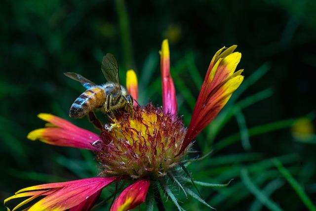 Bee, Green, Flower, Nature, Blossom, Summer, Spring