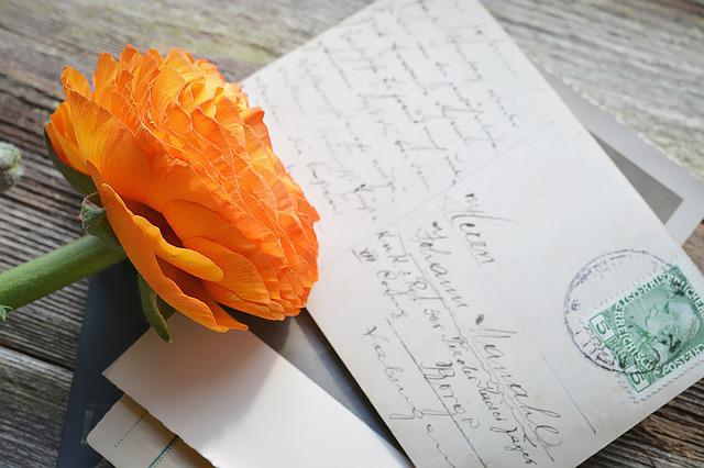 Flower, Ranunculus, Blossom, Bloom, Orange