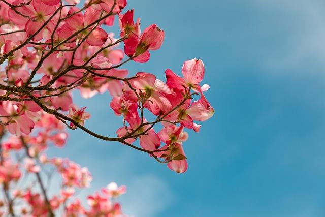 Blossom, Pink, Garden, Nature, Vegetable, Tree, Petals