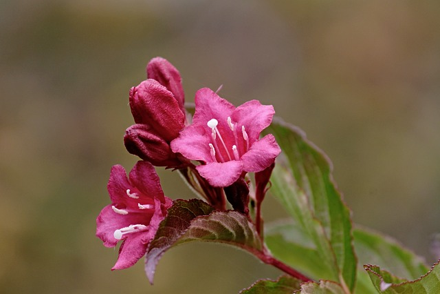 Blossom, Bloom, Pink, Petals, Pink Flower, Garden