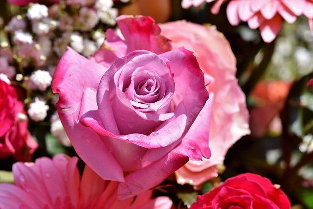 Rose, Rose Bloom, Blossom, Bloom, Romantic, Bloom