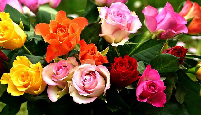 Roses, Colorful, Flowers, Blossom, Bloom, Garden, Color