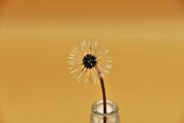 Dandelion, Blossom, Bloom, Seeds
