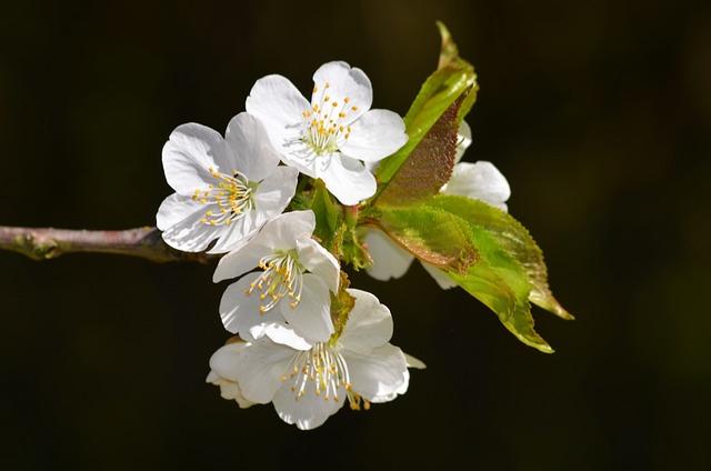 Blossom, Bloom, Summer, Apple Blossom, Spring