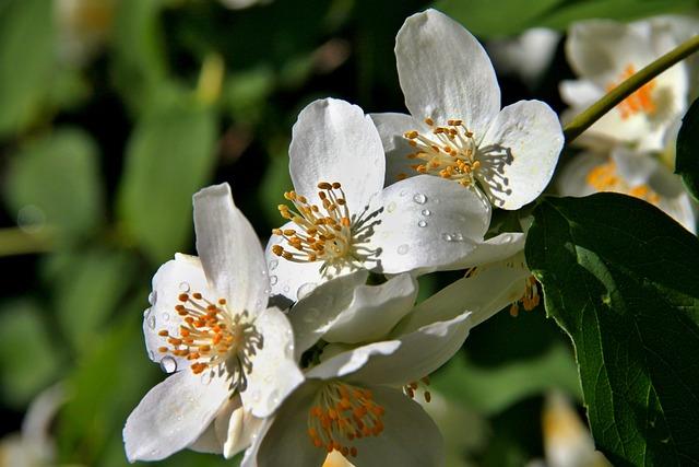 Spring, White, Blossom