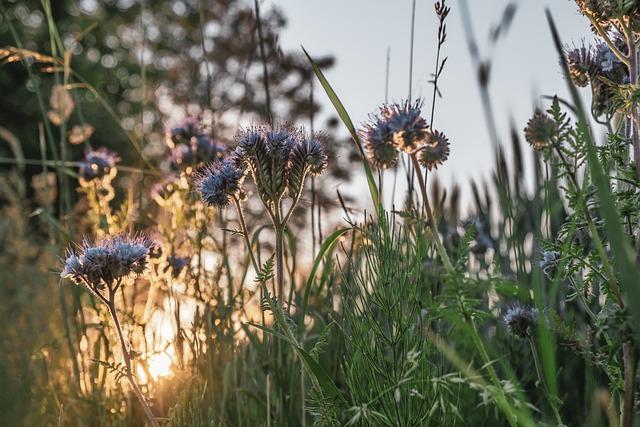 Sunset, Sun, Flowers, Bueschelschoen, Blossom, Bloom