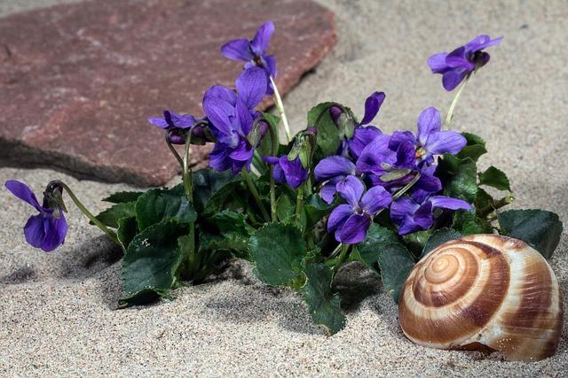 Violet, Blossom, Bloom, Violet Plant, Spring, Viola