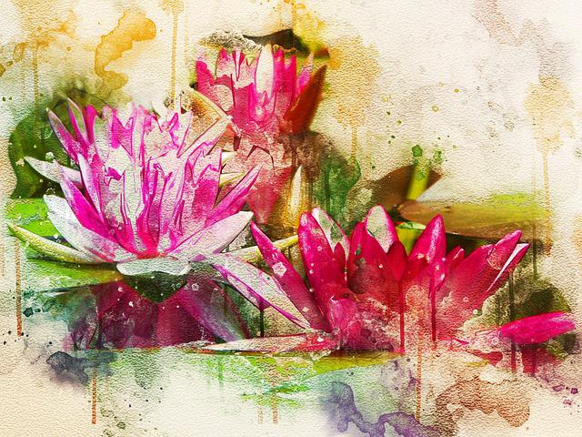 Waterlily, Pink, Lotus, Blossom, Aquatic, Plant, Flower