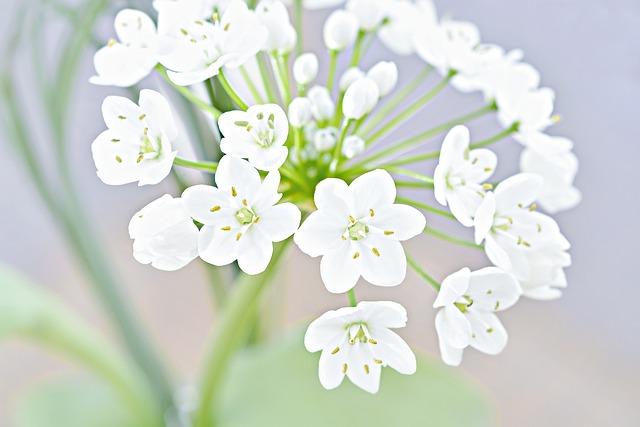 Flower, Blossom, Bloom, White, White Flower