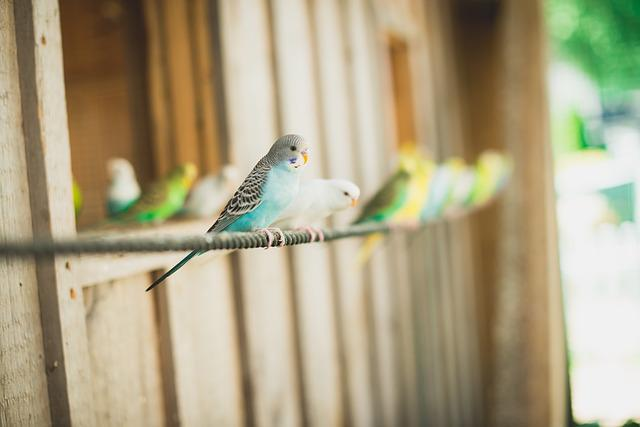 Bird, Canary, Animals, Flight, Blue, Green, Yellow