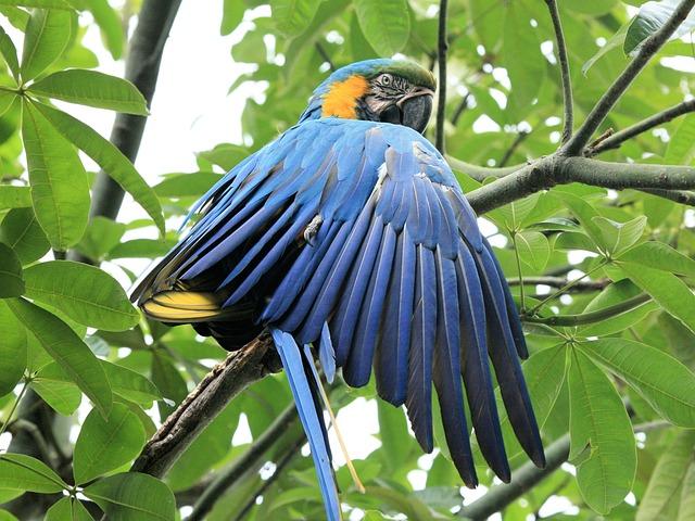 Blue And Yellow Macaw, Parrot, Blue Bird, Bird, Beak