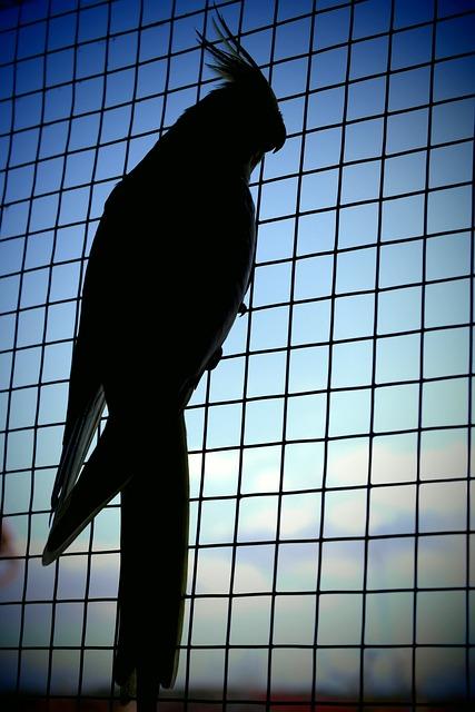 Parrot, Shadow, Captivity, Sky, Blue, Cockatiel