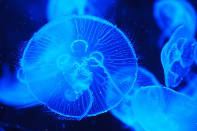 Jellyfish, Animal, Blue, Creature, Dark, Deep, Fish