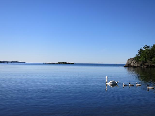 Swans, Sea, Blue, Family, Waterfowl, Fauna