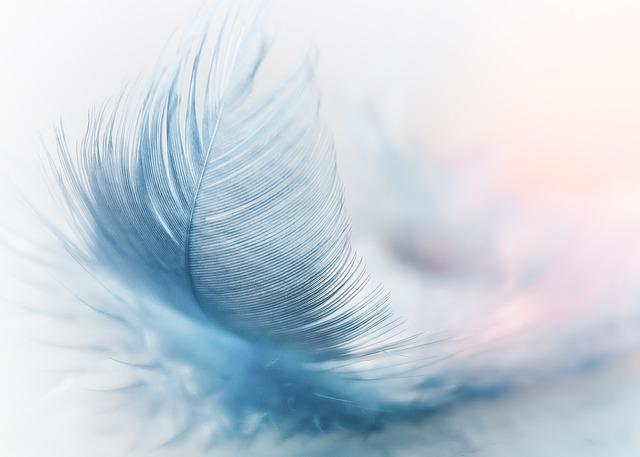 Feather, Ease, Slightly, Blue, Airy, Close Up
