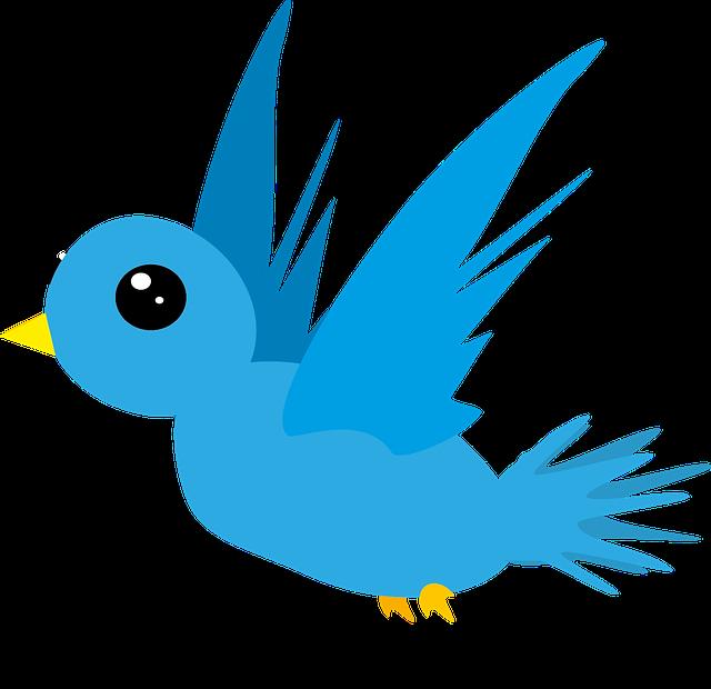Bird, Animal, Blue, Fly