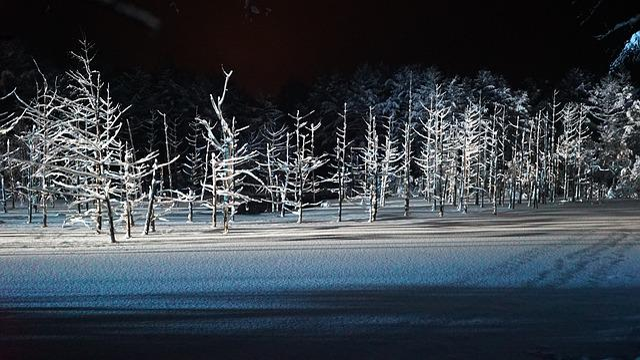 Blue Pond, Light Up, Biei, Blue, Wood, Forest