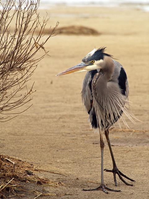 Bird, Animal, Animal Photography, Blue Heron