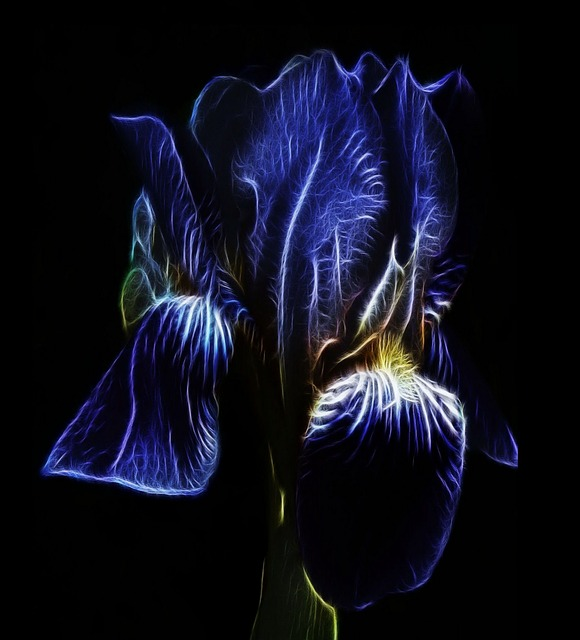 Fractalius, Photo Art, Blue, Iris, High Beard Iris