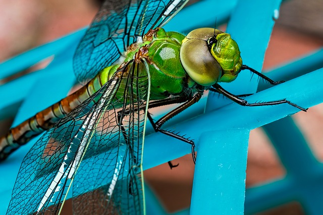 Dragonfly, Insect, Green, Closeup, Blue, Eyes, Wing
