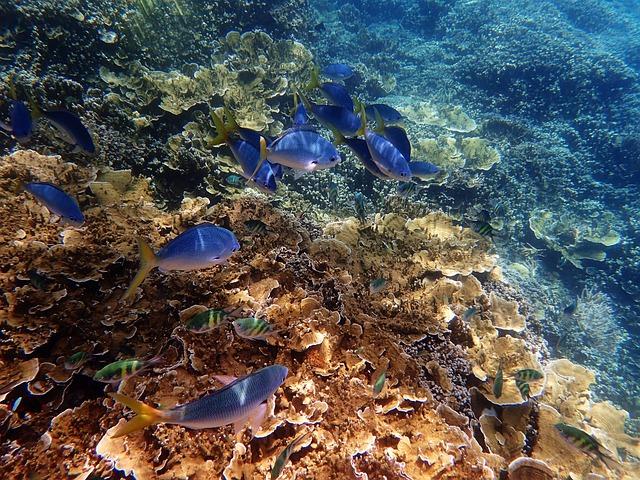 Marine, Great Barrier Reef, Blue