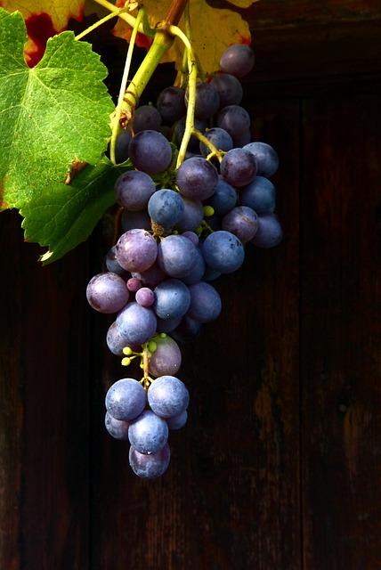 Wine, Red Wine, Blue Grape, Muscat Bleu, Blue
