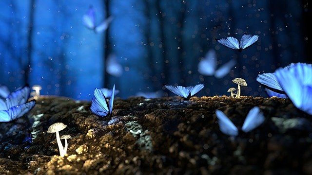 Butterfly, 3d, Blue, Mushroom, Forest, Fantasy