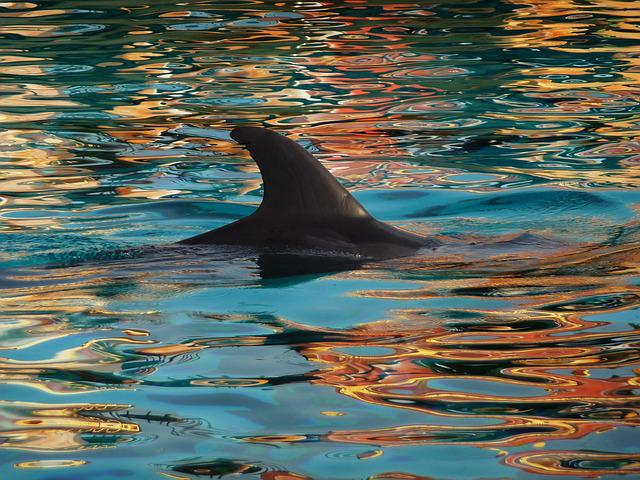 Dolphin, Fin, Nature, Blue, Water
