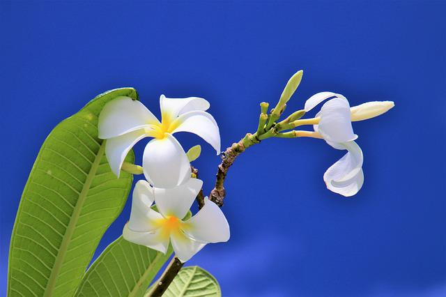 Blue, Sky, Maldives, Nature, Flower, Plant, Paradise