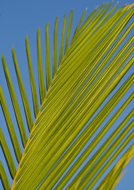 Frond, Palm, Leaf, Bangalow Palm, Green, Blue, Tropical