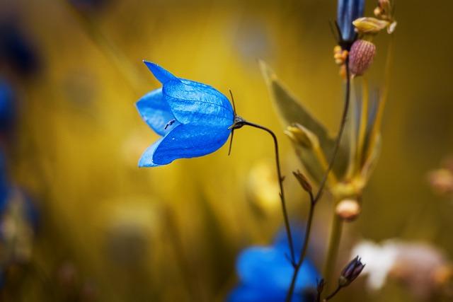 Bellflower, Blue Flower, Petals, Blue Petals, Harebell
