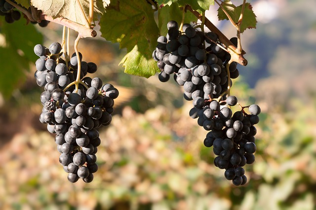 Grapes, Wine, Grape, Blue, Leaf, Fruit, Fruits, Plant