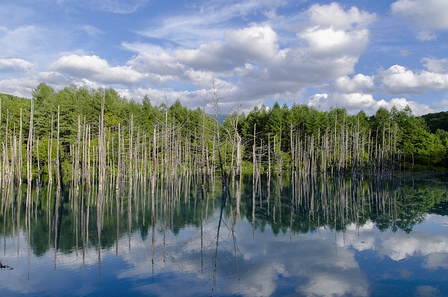 Blue Pond, Blue, Pond, Hokkaido, Biei, Wood, Sky