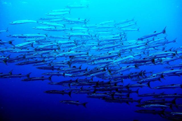 Sea, Palau, Blue