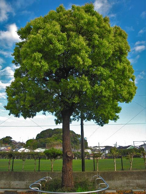 Blue Sky, Cloud, Image, Groves, Tree, Arboretum