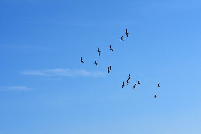 Gulls, Swarm, Birds, Blue Sky, Sun, Animals