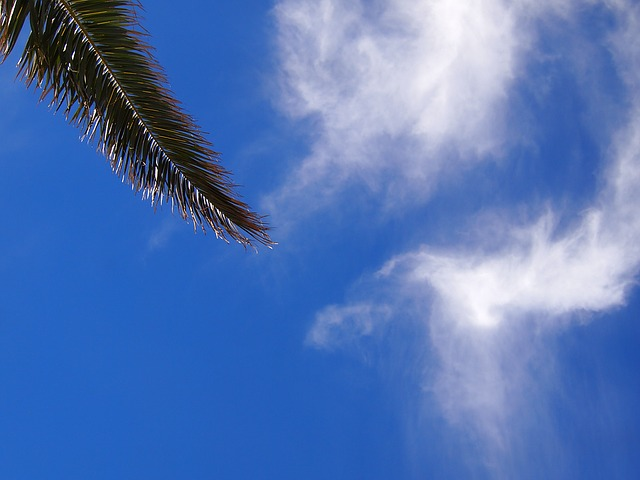 Blue Sky, Cloud, Palm Trees, Leaf, Mabori Kaigan, Sea