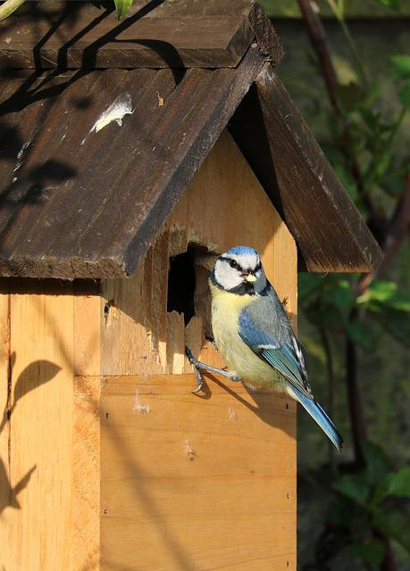 Blue Tit, Bird, Caterpillar, Bird Box, Bird House