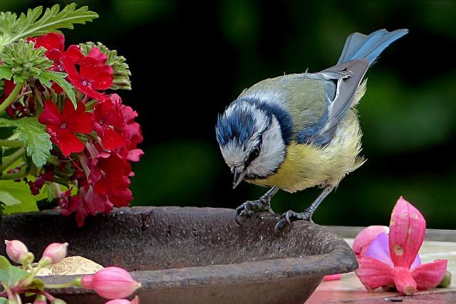 Bird, Tit, Blue Tit, Young, Cyanistes Caeruleus