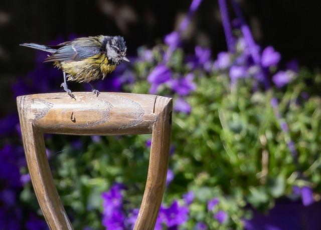 Blue Tit, Tit, Small Bird, Garden Bird, Garden