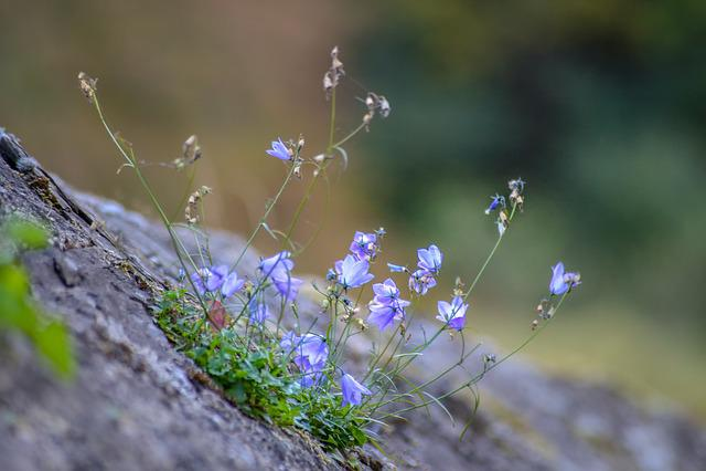 Blue, Wall, Wall Flower, Stone Wall, Flowers, Stone