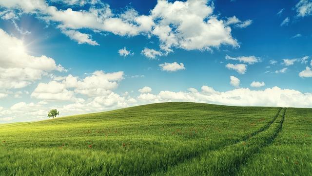 Field, Poppy, Summer, Nature, Clouds, Blue White