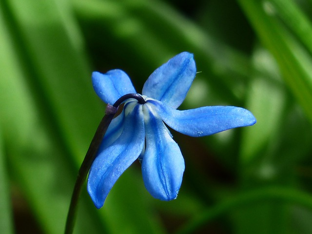 Bluebell, Flower, Blossom, Bloom, Blue