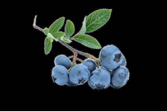 Blueberry, Fruit, Blue