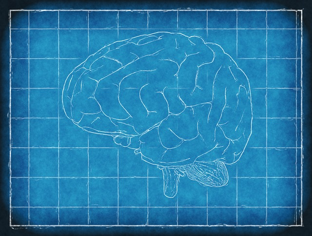 Brain, Blueprint, Thinking, Analysis, Intelligence