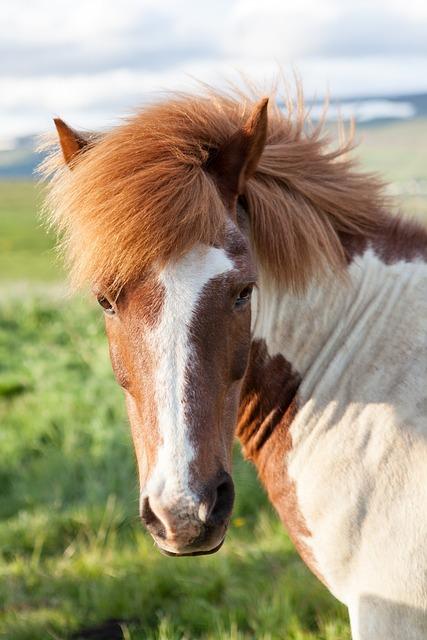 Animal, Animal Photography, Blur, Close-up, Equine